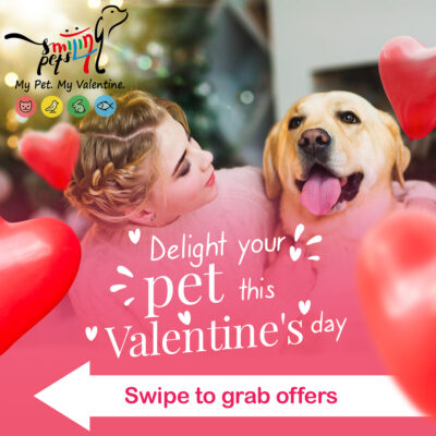 smiling pets valentine day-4