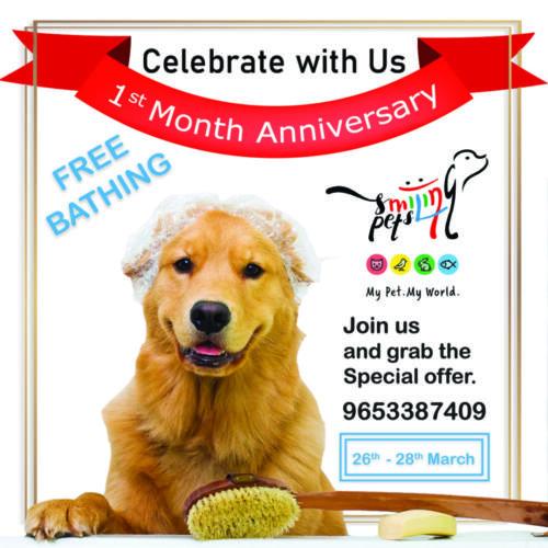 month-anniversary-dog-bath-1000x1000